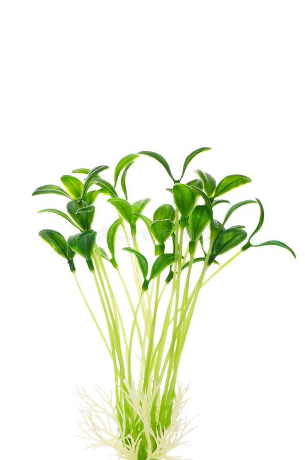 Зеленые изолированные сеянцы стоковое изображение rf