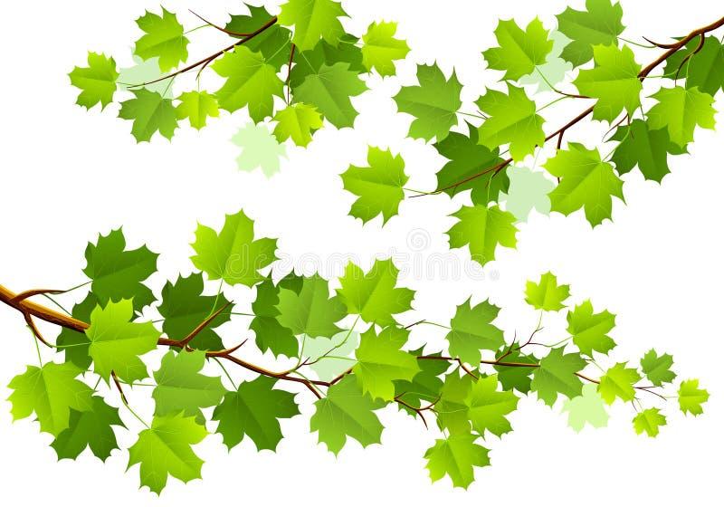 Зеленые кленовые листы бесплатная иллюстрация