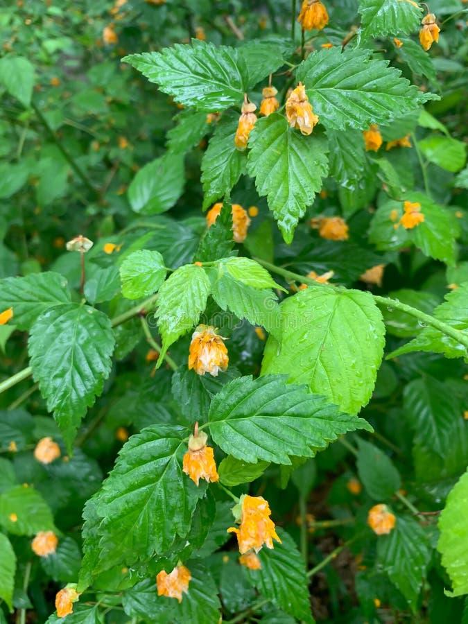 Зеленые листья и меньшая желтая предпосылка цветка стоковое изображение