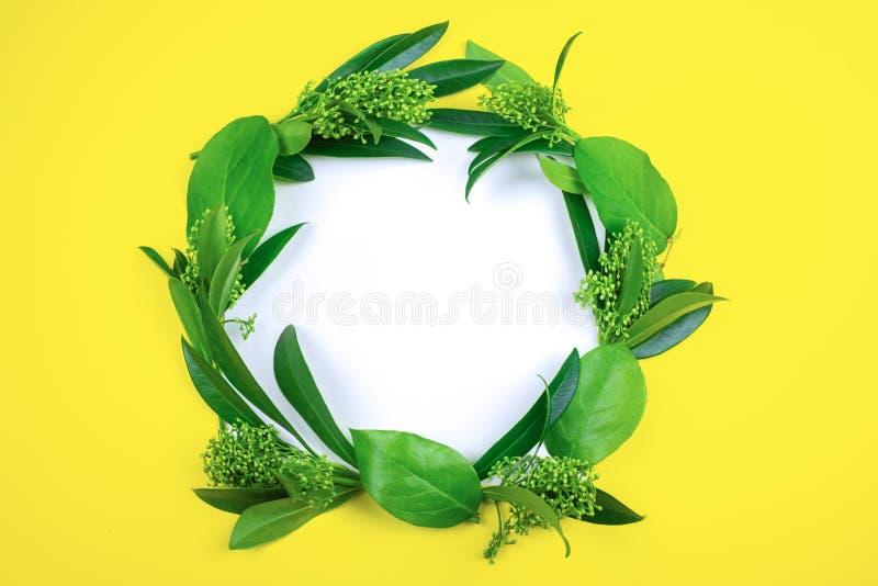 Зеленые листья клали вне в форме венка на белый лист бумаги на желтую предпосылку стоковые фото