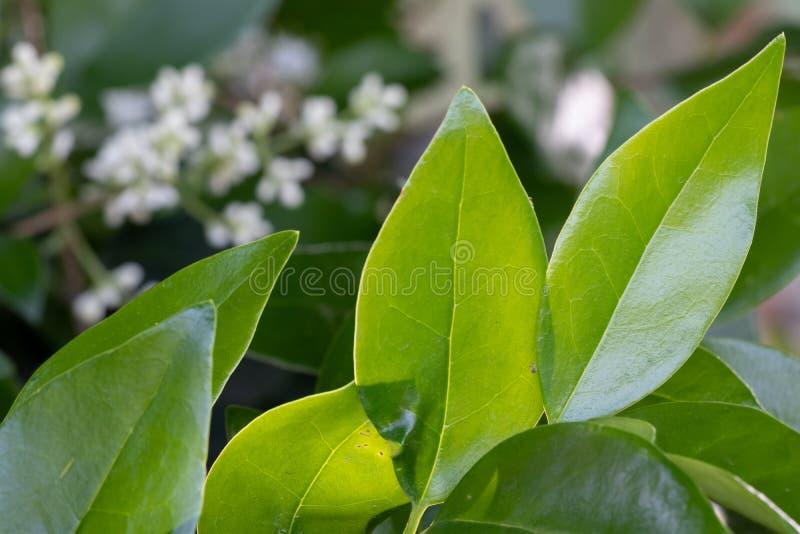 Зеленые листья на расплывчатой предпосылке в ярком солнечном дне стоковые фотографии rf