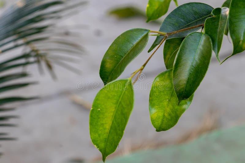 Зеленые листья на расплывчатой предпосылке в ярком солнечном дне стоковое фото