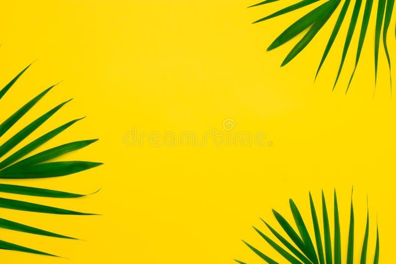 Зеленые листья пальмы на желтой предпосылке Положенный квартирой минимальный стиль природы тропических листьев ладони на желтой п стоковое изображение rf