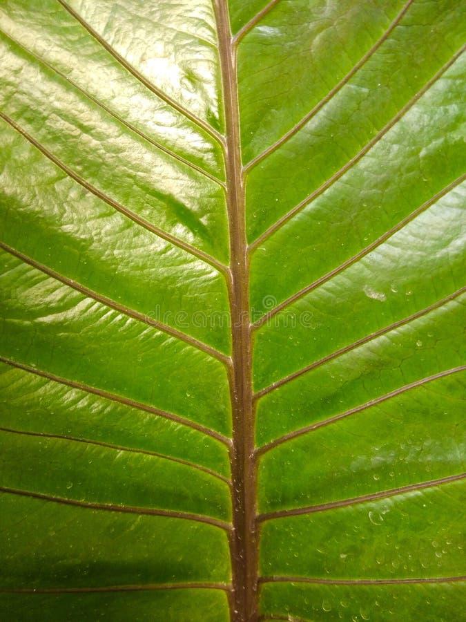 Зеленые листья с коричневым цветом стоковые изображения rf