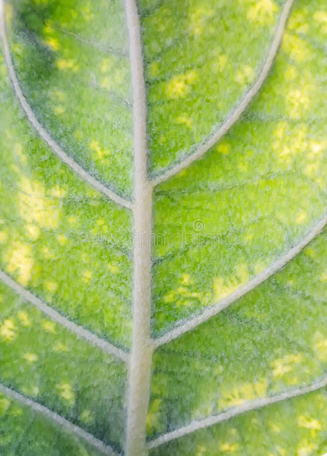 Зеленые листья с ясными листьями на дереве стоковые изображения