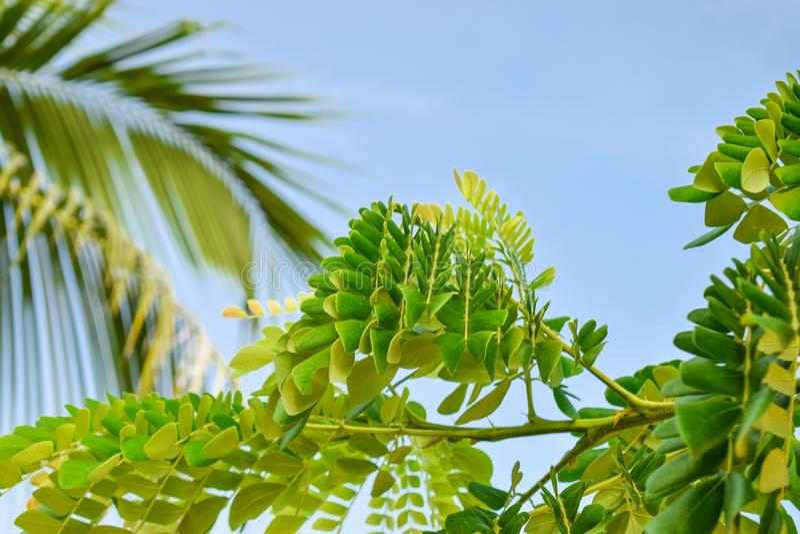Зеленые листья тропического завода с предпосылкой ветви ладони стоковые фото