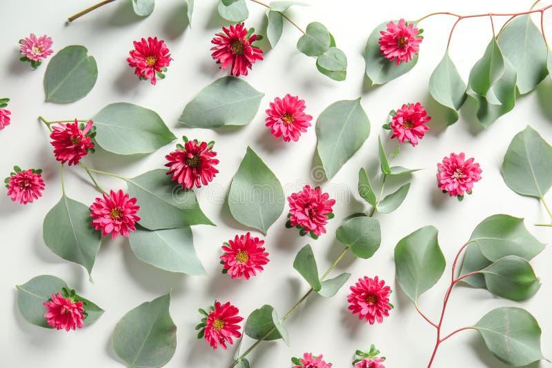 Зеленые листья эвкалипта и цветки хризантемы на белой предпосылке стоковые изображения
