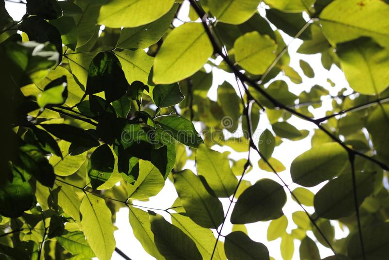 Зеленые листья, verdes folhas тропические стоковые фотографии rf