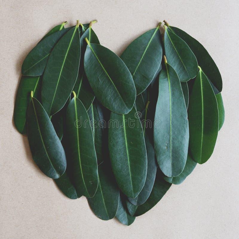 Зеленые лист аранжированные в предпосылку текстуры формы сердца, концепцию страсти экологичности, 1:1 стоковая фотография rf