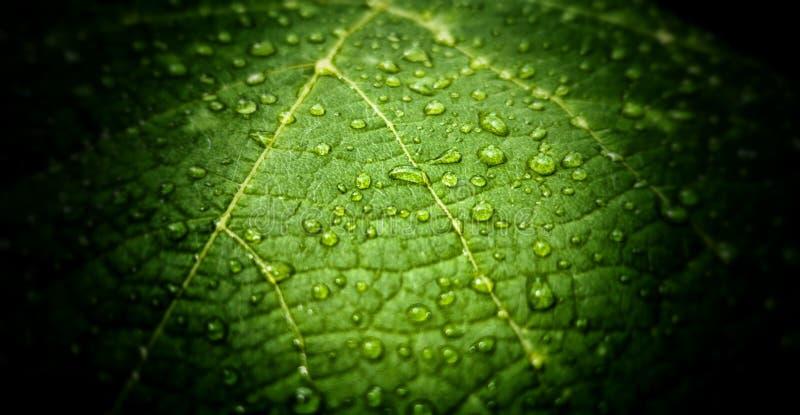Зеленые лист в саде после дождя стоковые изображения