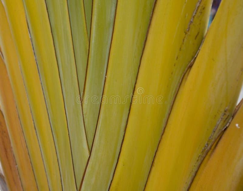 Зеленые лист ладони формируя интересную первоначальную естественную предпосылку стоковые фотографии rf