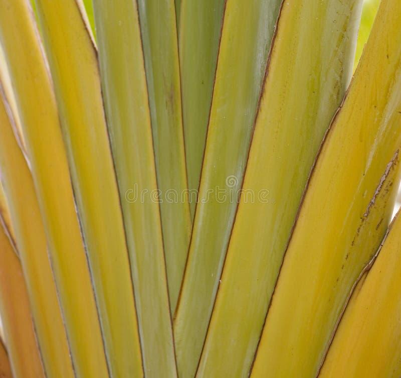 Зеленые лист ладони формируя интересную первоначальную естественную предпосылку стоковые изображения rf