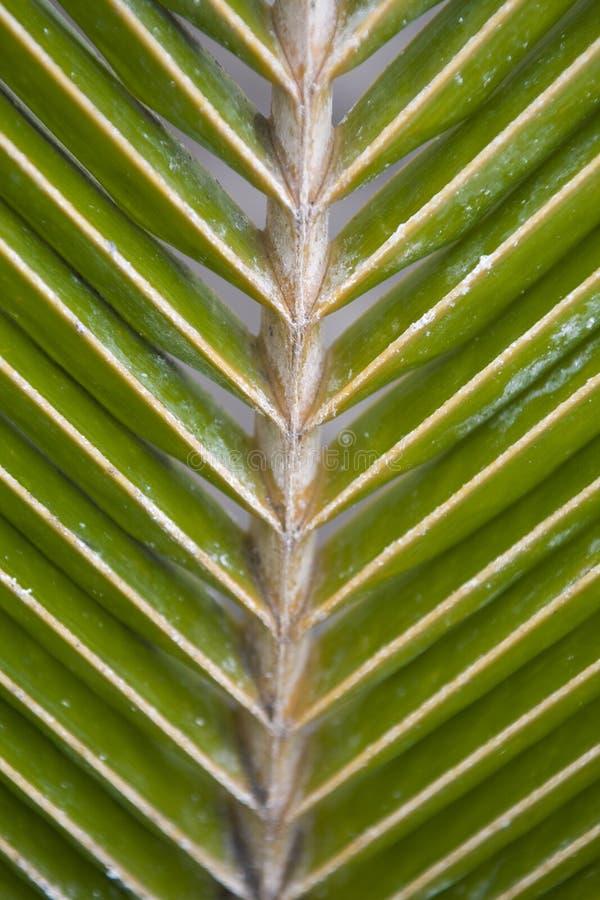 Зеленые лист ладони формируя интересную первоначальную естественную предпосылку стоковое изображение