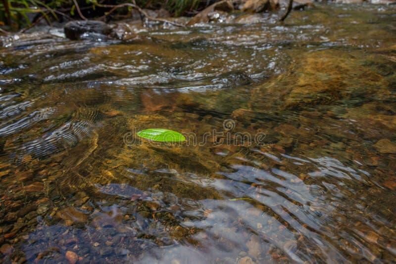 Зеленые лист плавая на реку стоковые изображения