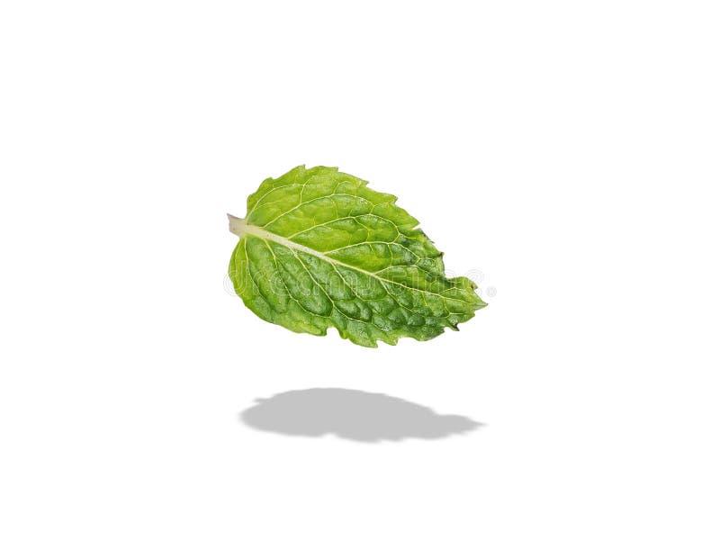 Зеленые лист свежей зеленой мяты изолированной на белой предпосылке стоковые фото