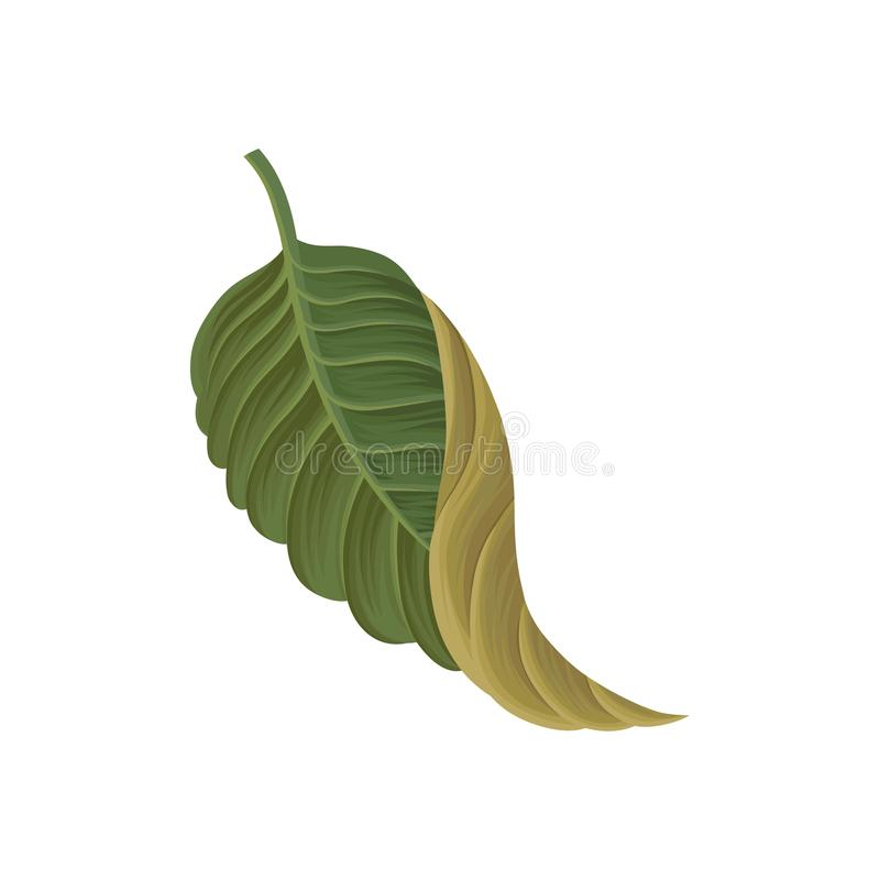 Зеленые лист тропического завода, троповой иллюстрации вектора элемента ботаники иллюстрация вектора
