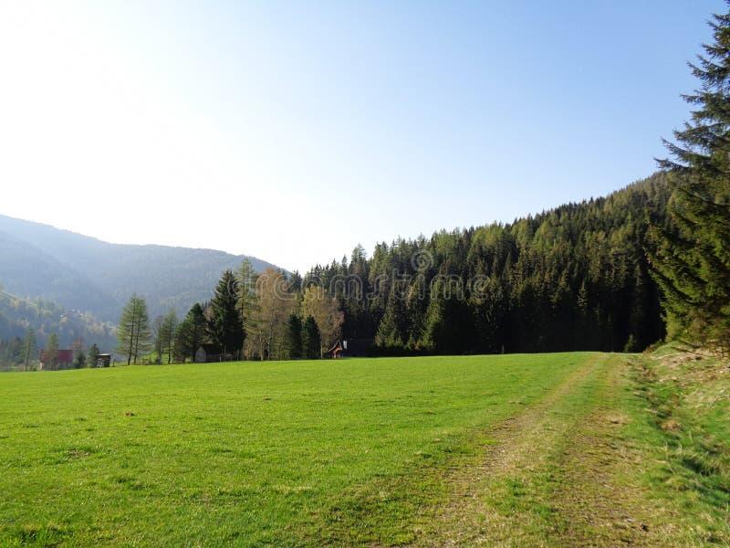 зеленые луг и лес в горных вершинах в Австрии стоковые фотографии rf
