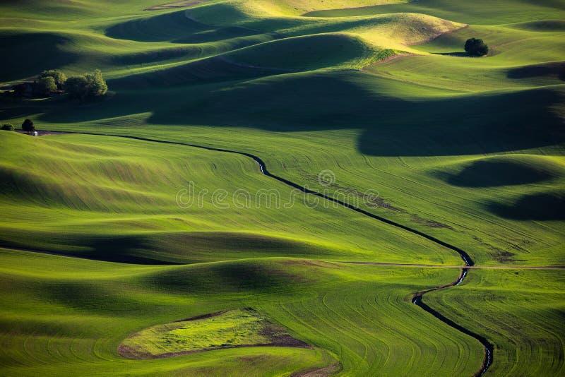 зеленые лужки стоковая фотография