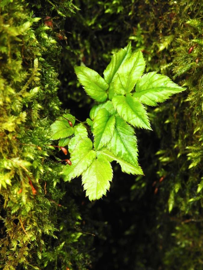 Зеленые мох и трава, Литва стоковое изображение
