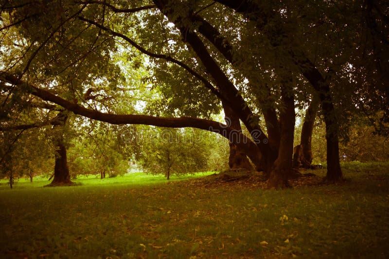 Зеленые нечестные деревья в парке ретро стоковые фото