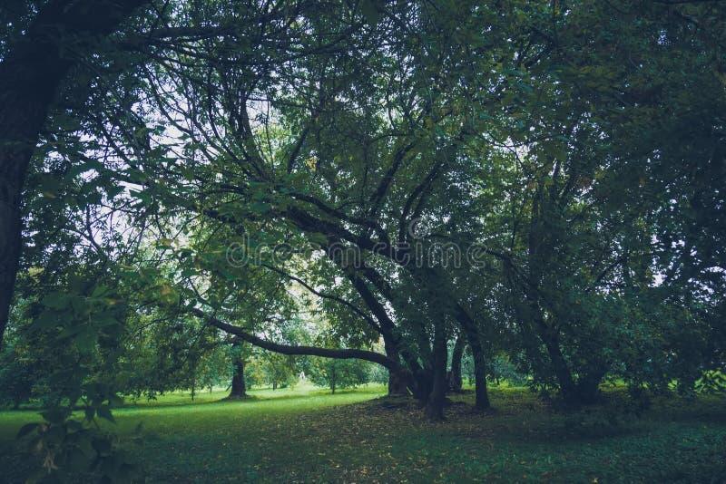 Зеленые нечестные деревья в парке ретро стоковая фотография rf