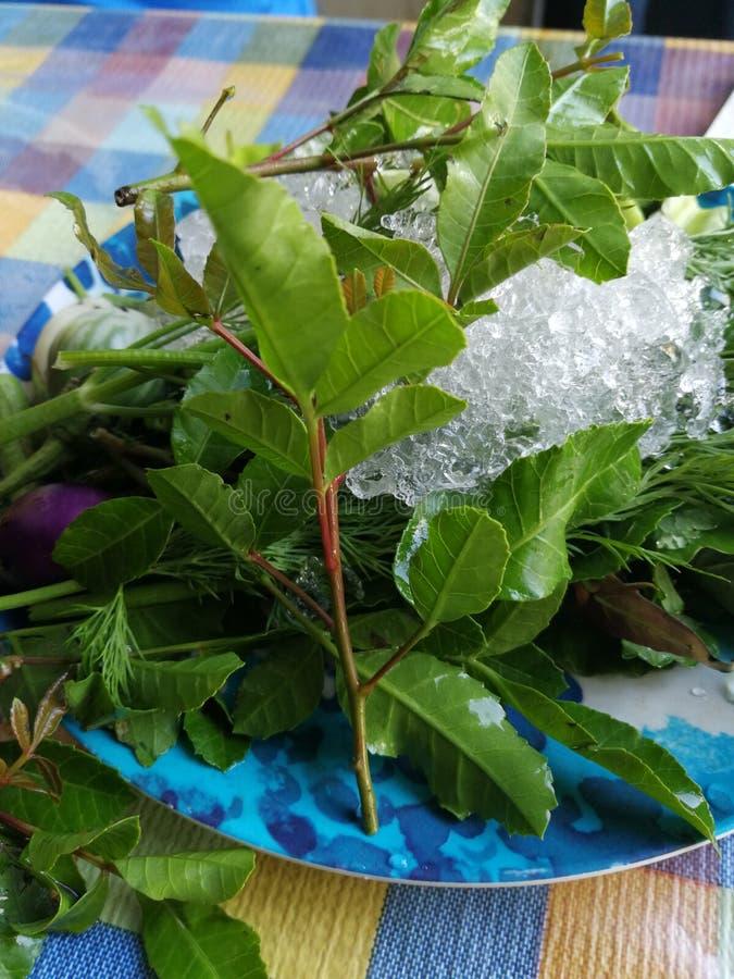 Зеленые овощи, травы на замороженном блюде стоковая фотография rf