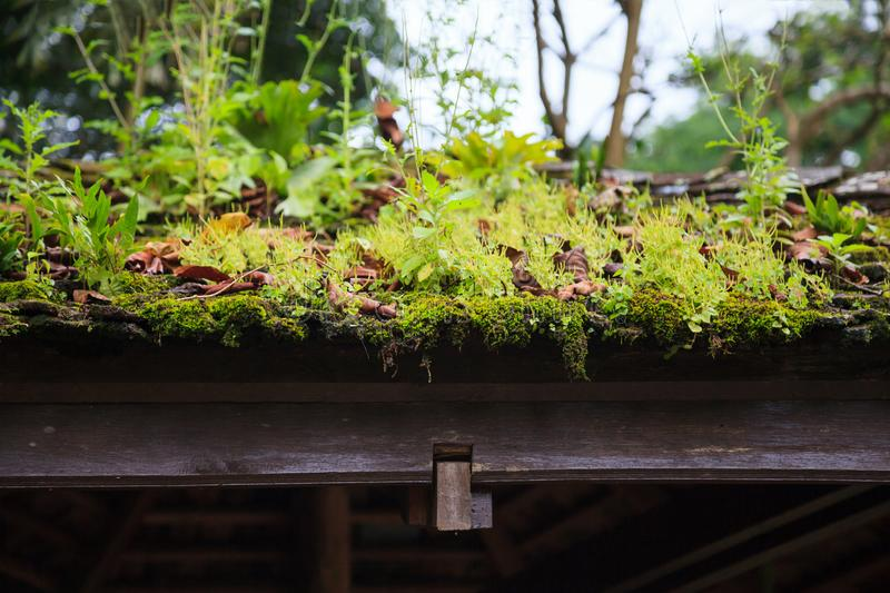 Зеленые одичалые свежие заводы естественных жизней, мох, лишайник, трава растя на деревянной соломенной крыше предпосылки газебо  стоковые изображения rf
