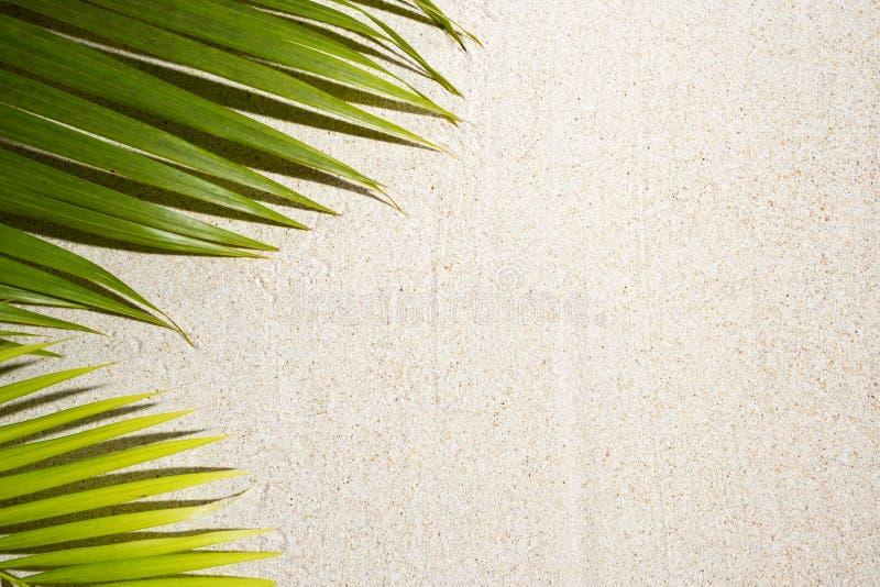 Зеленые пальмовые листки на белом песке с копировальным пространством стоковое фото rf
