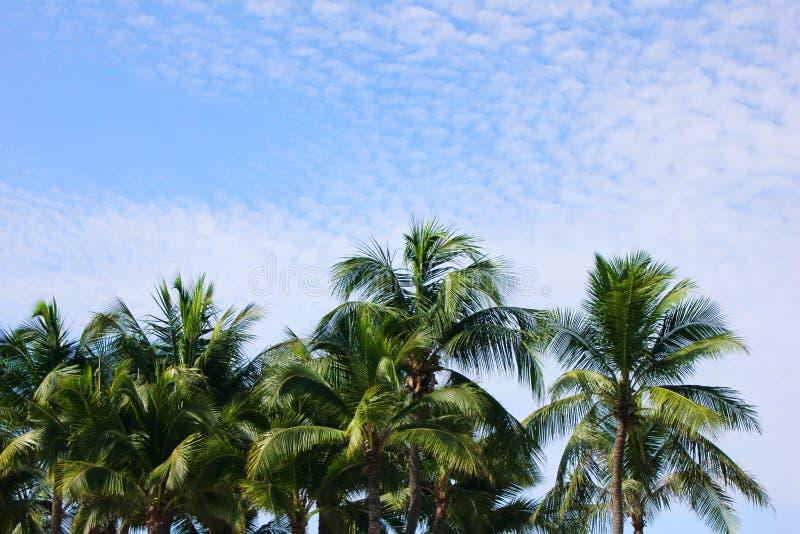 Зеленые пальмы против голубого неба на солнечный день r стоковое изображение rf
