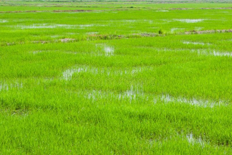 Зеленые поля в Pulau Pinang стоковое фото