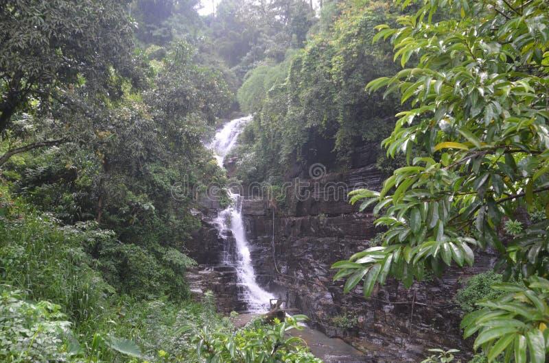зеленые природа и водопад стоковая фотография rf