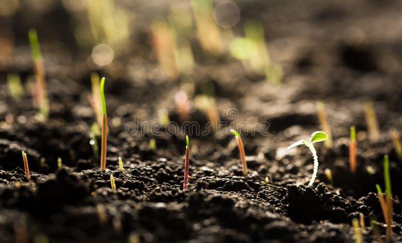 Зеленые растения в взгляде конца-вверх почвы стоковое изображение rf
