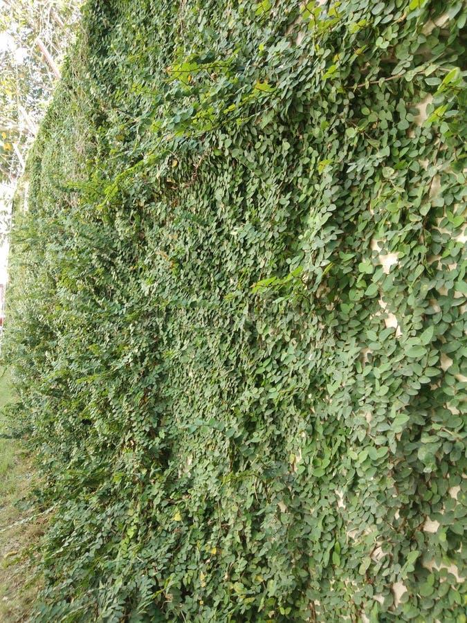 Зеленые растения на старых стенах для предпосылки стоковое фото