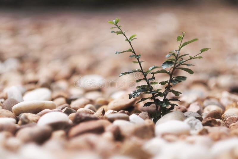 Зеленые растения на утесе стоковые изображения