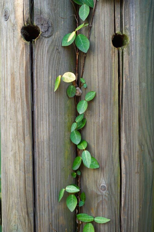 Зеленые растения разваливаются между 2 древесинами стоковые изображения rf