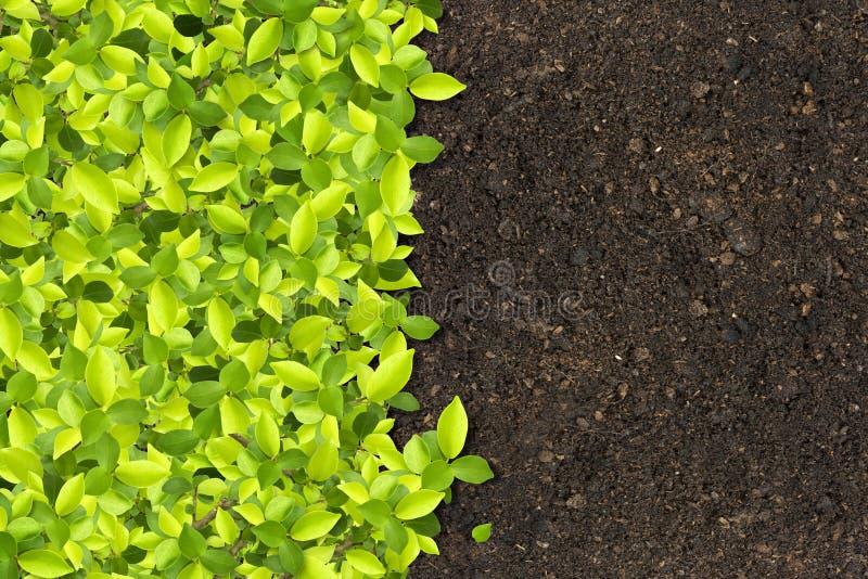 зеленые растущие заводы стоковое изображение rf
