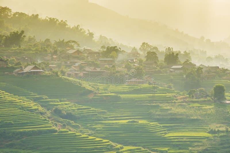 Зеленые рисовые поля в горах в деревне Сапа стоковое фото