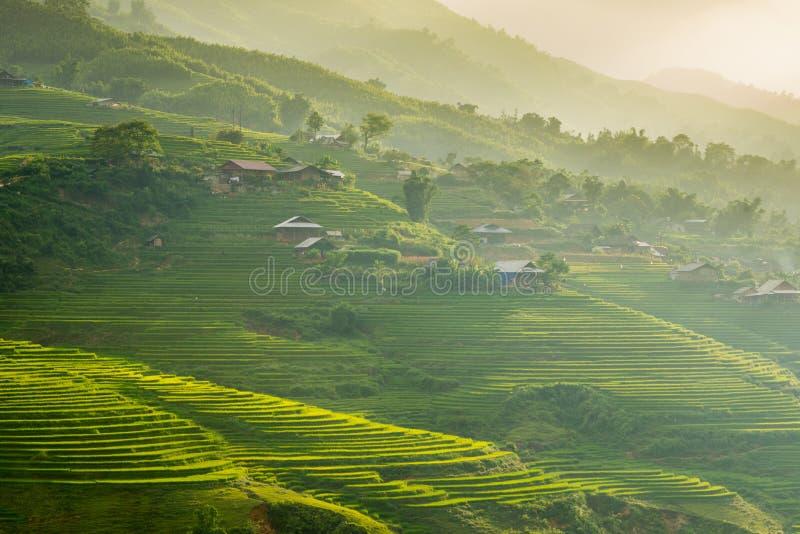 Зеленые рисовые поля в горах в деревне Сапа стоковое изображение