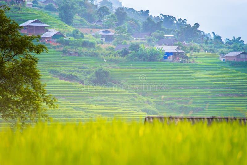 Зеленые рисовые поля в горах в деревне Сапа стоковая фотография