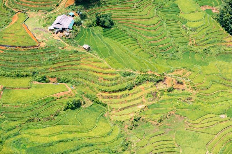 Зеленые рисовые поля в горах в деревне Сапа стоковое изображение rf