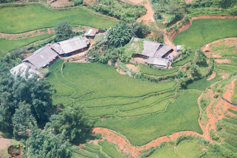Зеленые рисовые поля в горах в деревне Сапа стоковая фотография rf