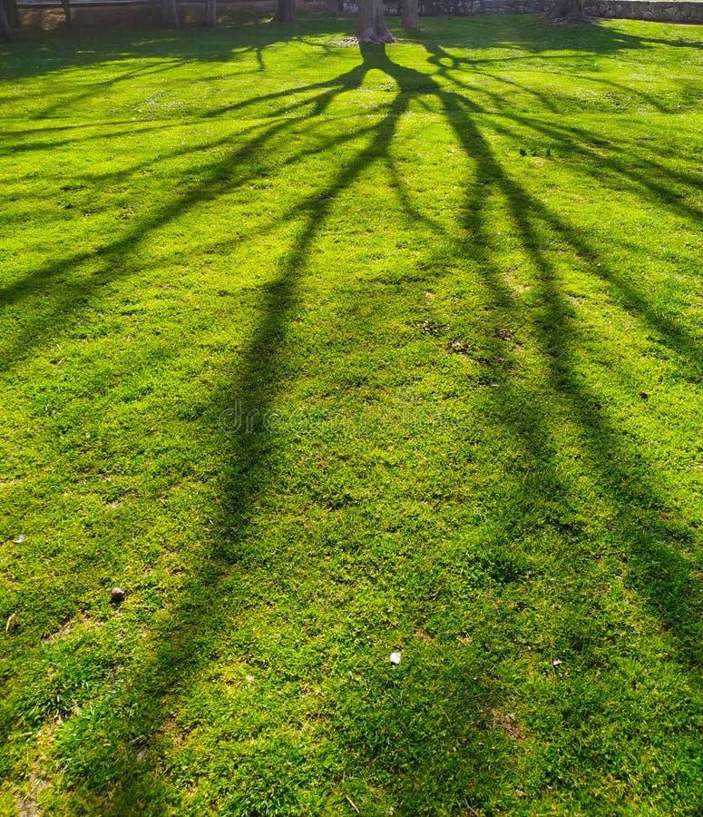 Зеленые тени луга и дерева стоковое изображение rf