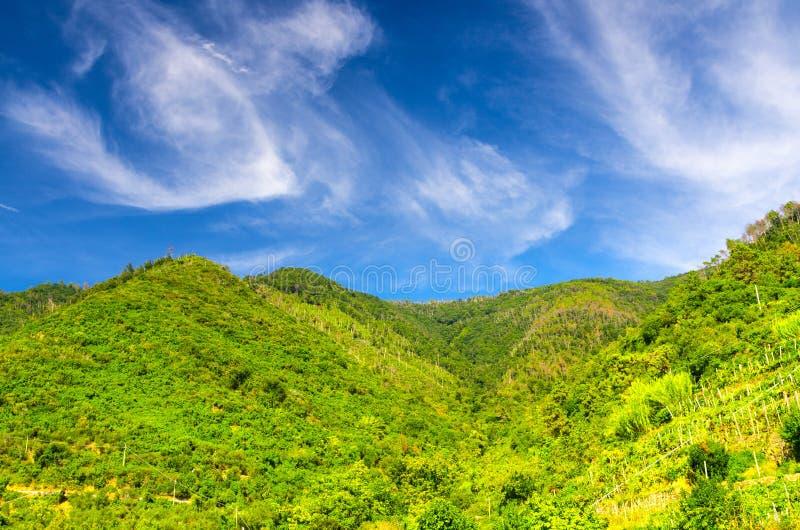 Зеленые холмы с кустами и деревьями виноградника, голубое небо с прозрачными белыми облаками копируют предпосылку космоса, взгляд стоковые изображения