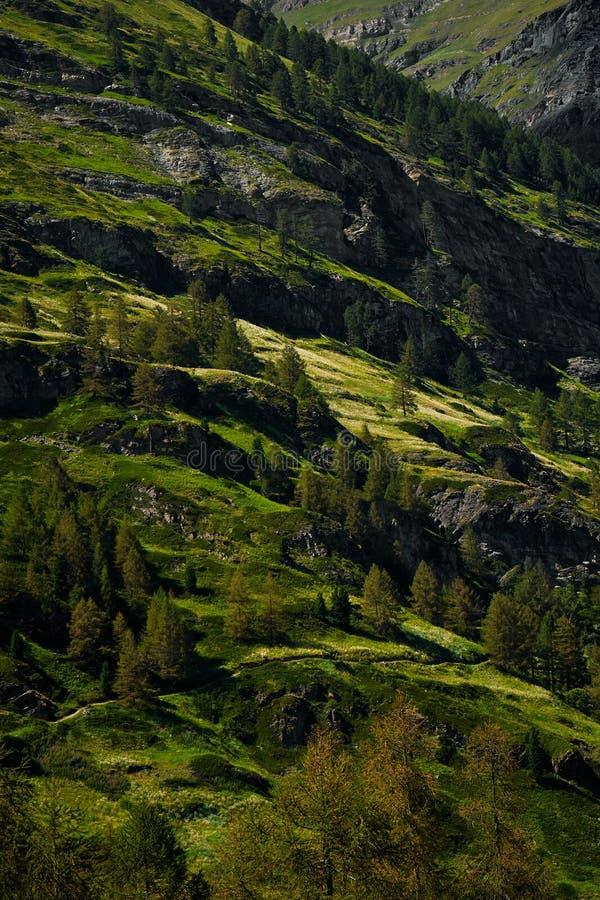 Зеленые холмы Швейцарии летом стоковая фотография