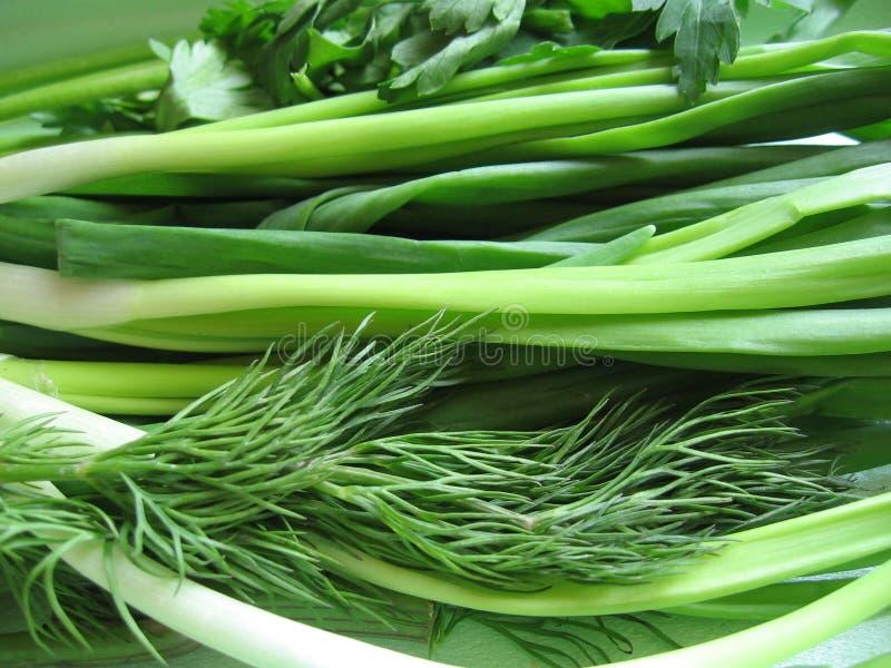 зеленые цвета стоковая фотография rf
