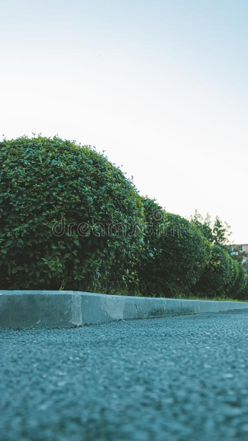 Зеленые цветники вдоль дороги в парке Хорошо выхоленные и уравновешенные небольшие деревья и кусты Нижний низкий взгляд от уровня стоковая фотография rf