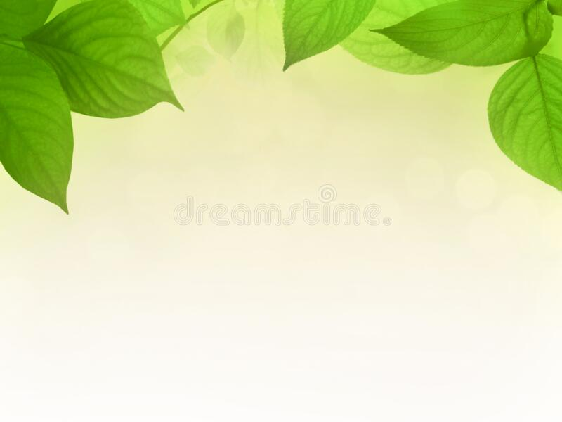 Зеленые leafes перед предпосылкой градиента стоковое фото rf
