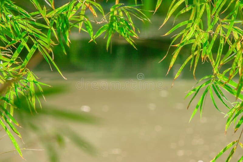 Зеленый бамбук выходит рамка или граница с предпосылкой bokeh стоковые изображения