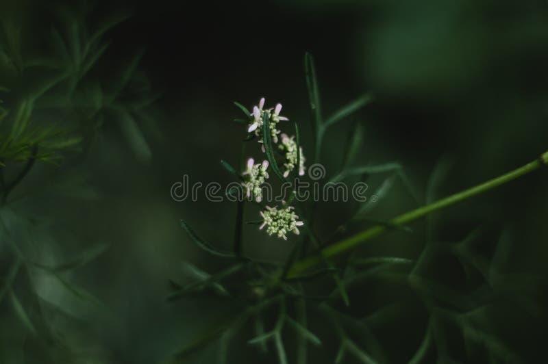 Зеленый белый цветок стоковое фото rf