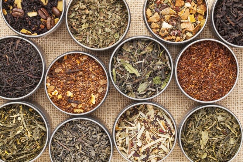 Зеленый, белый, черный и травяной чай стоковое фото rf